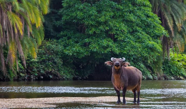 Explore the river's unique wildlife