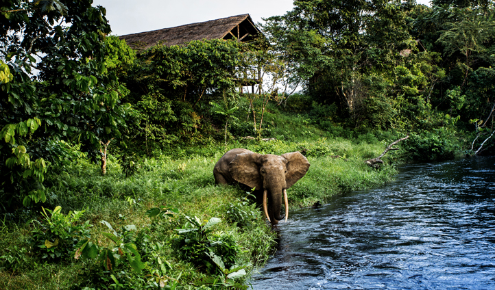 Holidays in the Congo