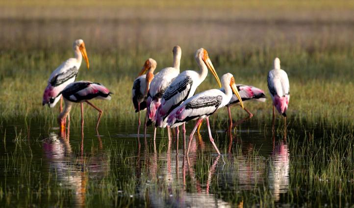 Admire the beautiful colours of Sri Lankan bird life