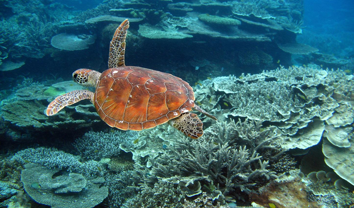 Swim with turtles in Australia