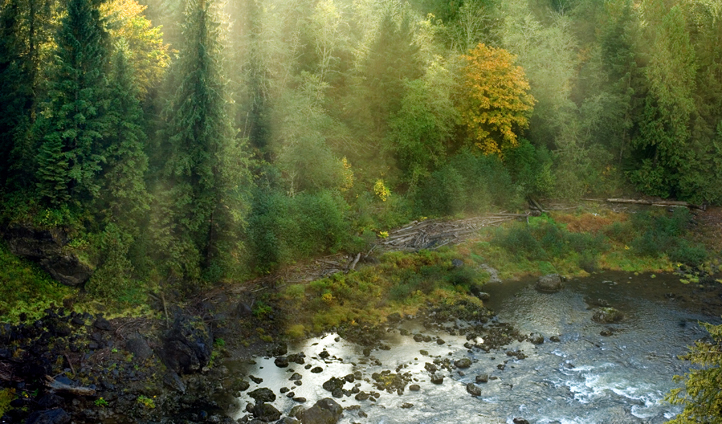 Are you brave enough to venture into the woods of Snoqualmie?