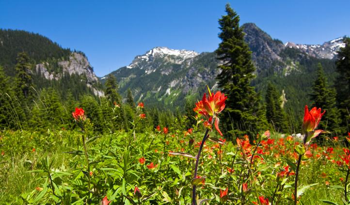 Wander through colourful wildflower meadows