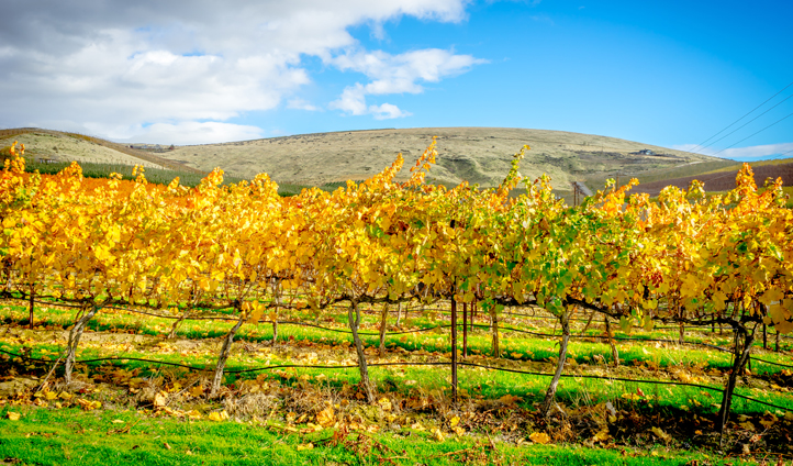 It would be rude not to visit Yakima Wine Valley while you're here...