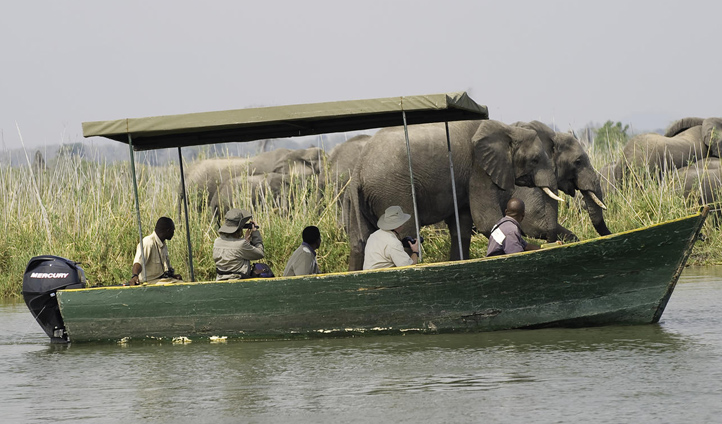 Get up close and personal with wildlife on a boating safari