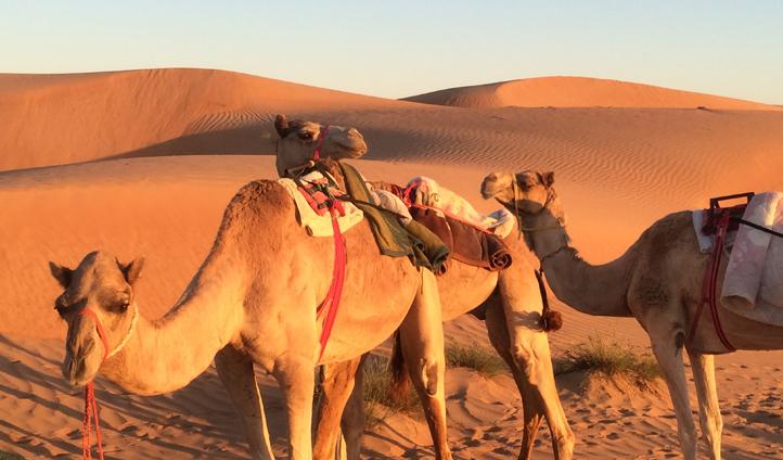 Who needs a car when you've got a camel?