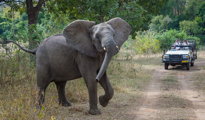 Get up close and personal with the Big 5