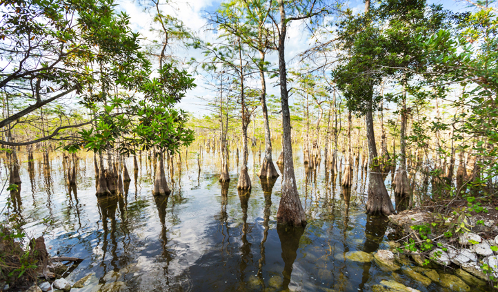 Experience a private tour of the Everglades