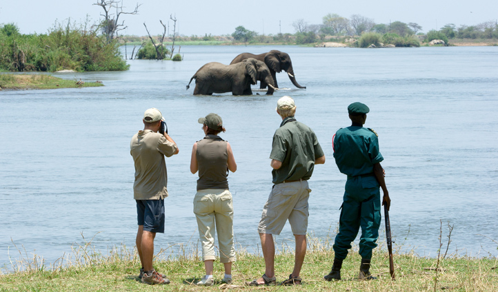 Join expert guides to track down the Big 5