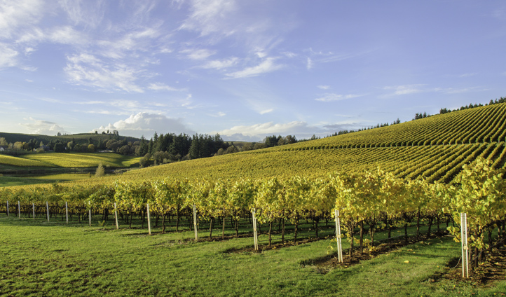 Enjoy a well earned glass of wine at Willamette Valley