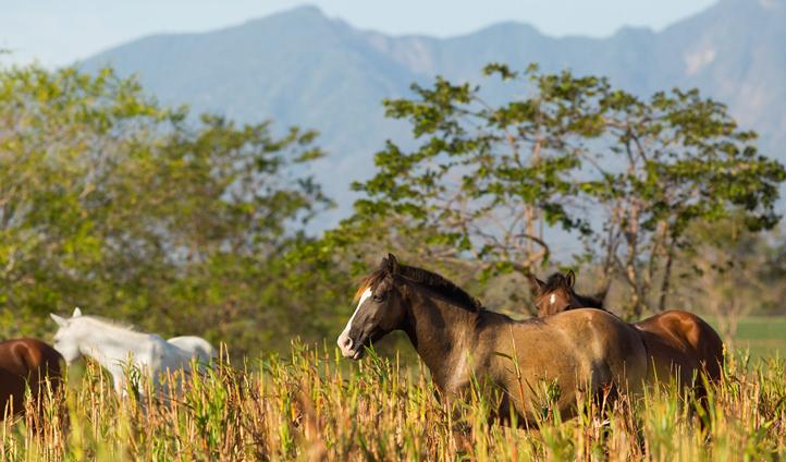Horses at Nekupe