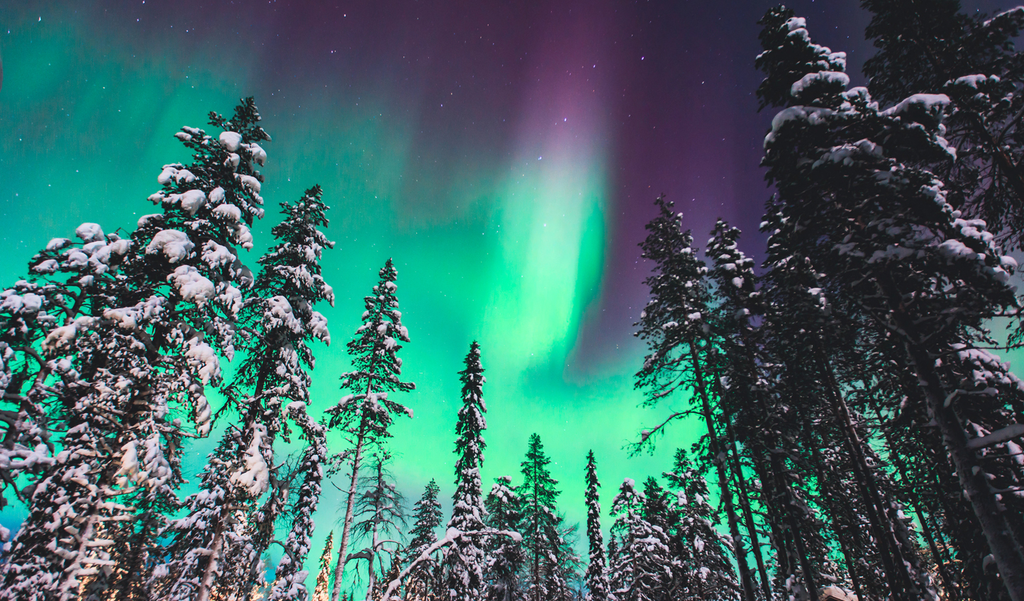 Chase the Northern Lights through the forest