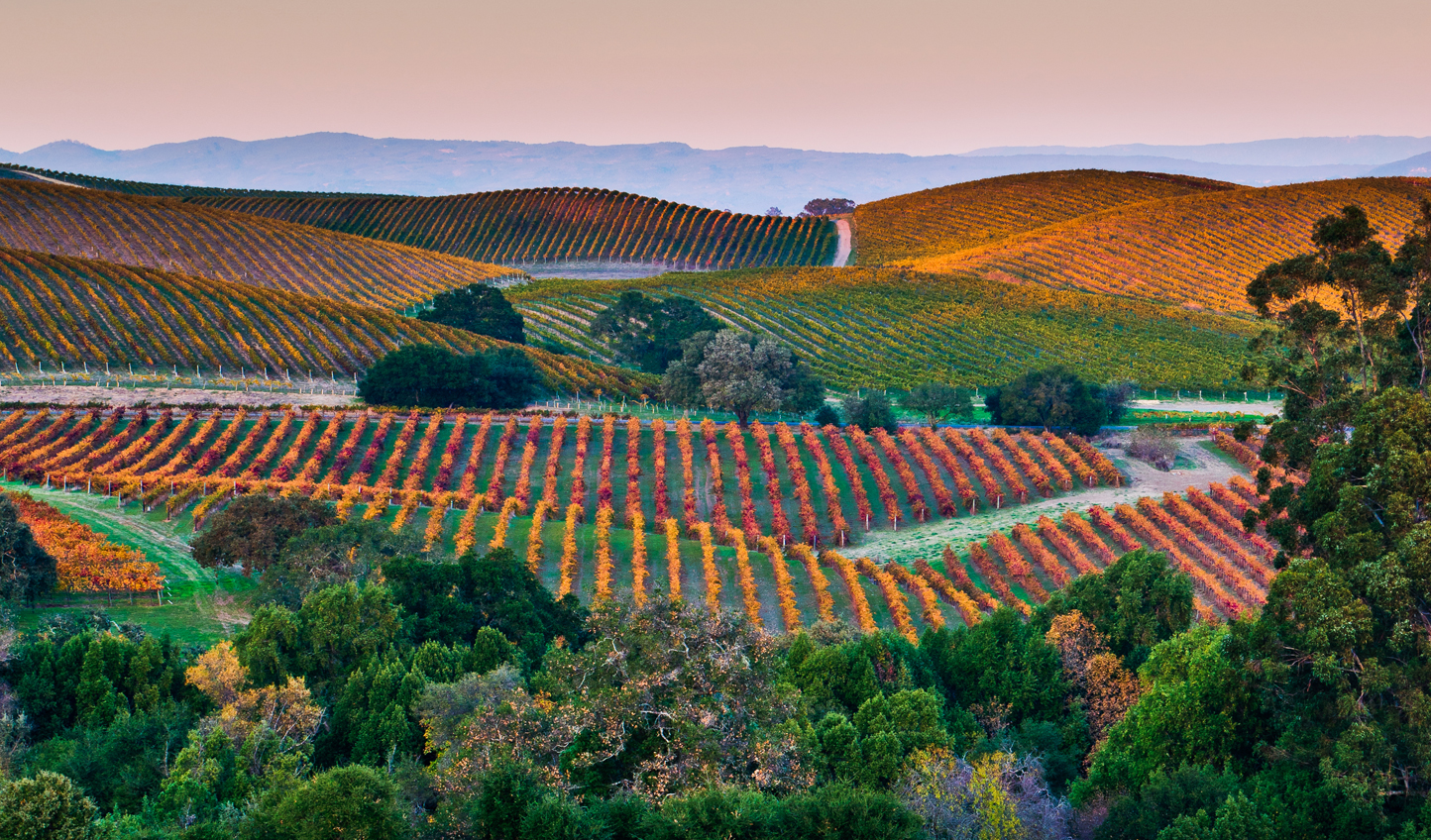 The ever changing colours of Napa's seasons