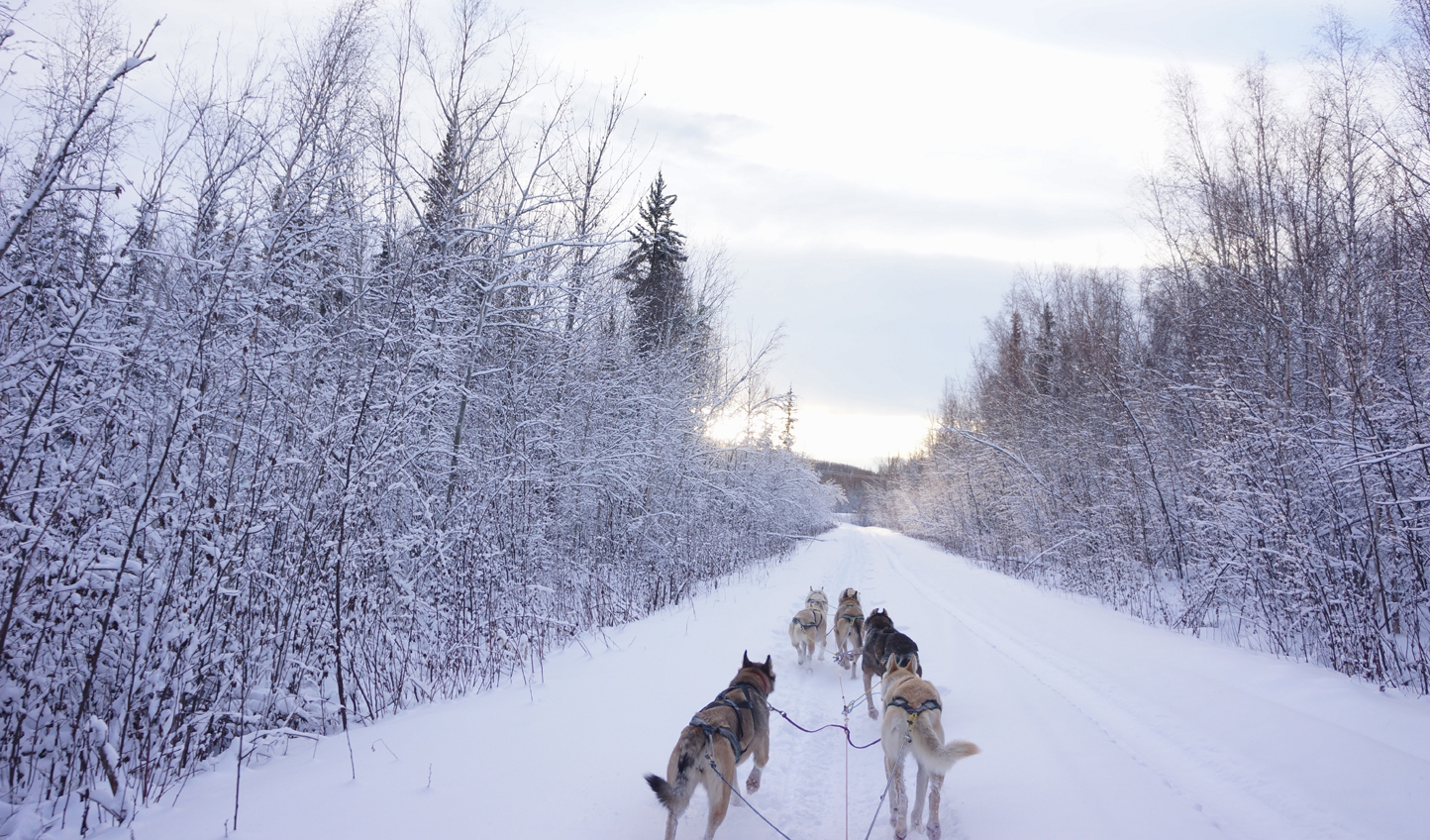 Have you got it in you to take on the Iditarod?