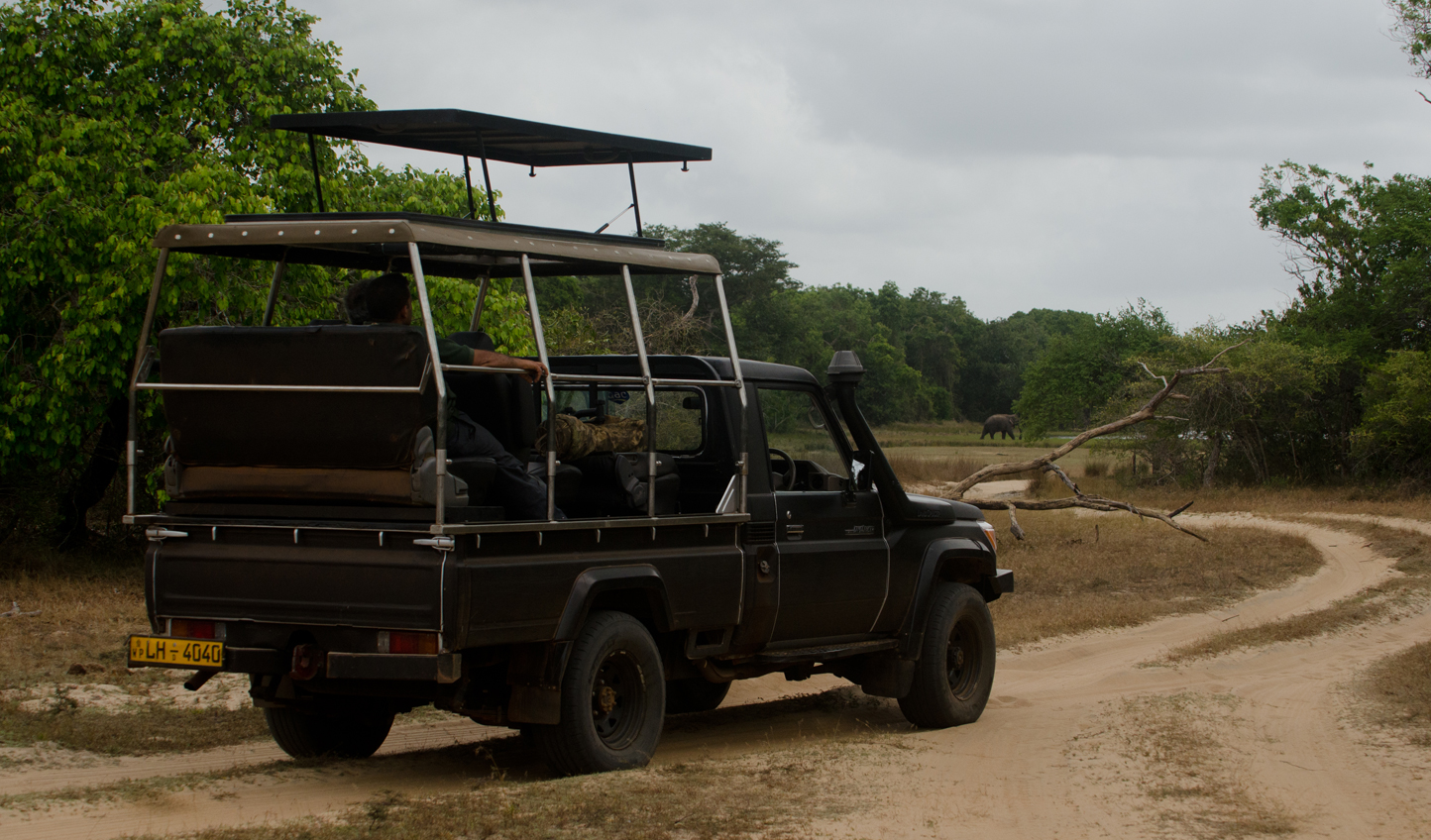 Head out on fascinating game drives