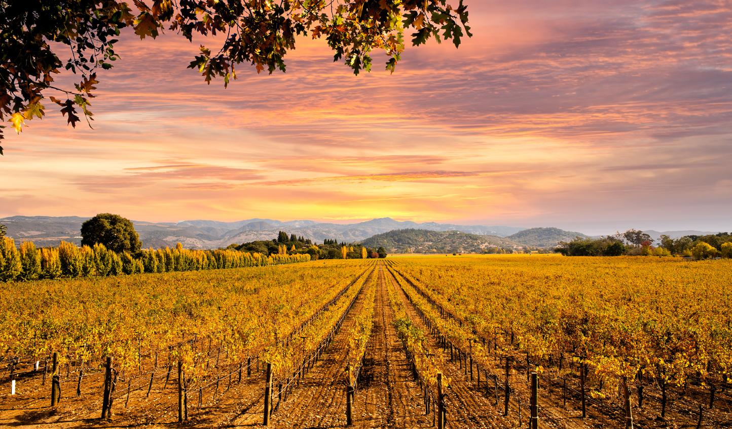 Napa-Valley-Autumn-Sunset_4