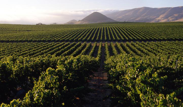 Vineyards of Napa