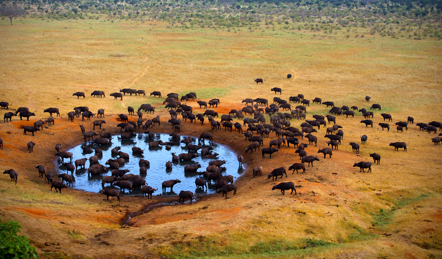 Elephants at the watering hole in the Sera Conservancy