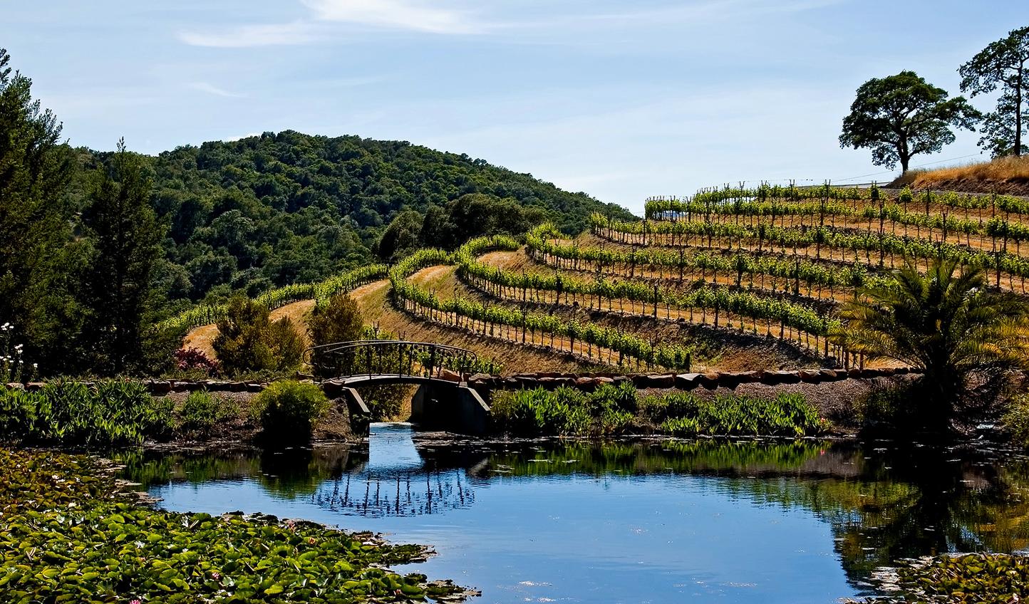 Bigstock-Napa-Valley-vineya