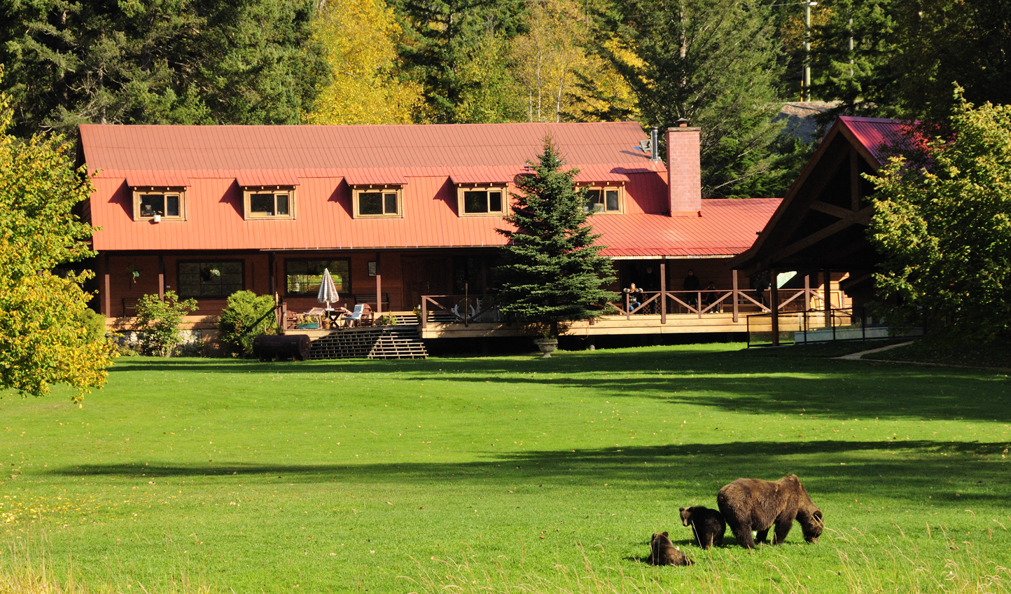 In the heart of the Great Bear Rainforest, watch as bears stroll across the front lawn