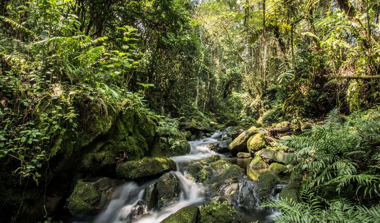 Trek alongside peaceful rivers in serach of mighty gorillas