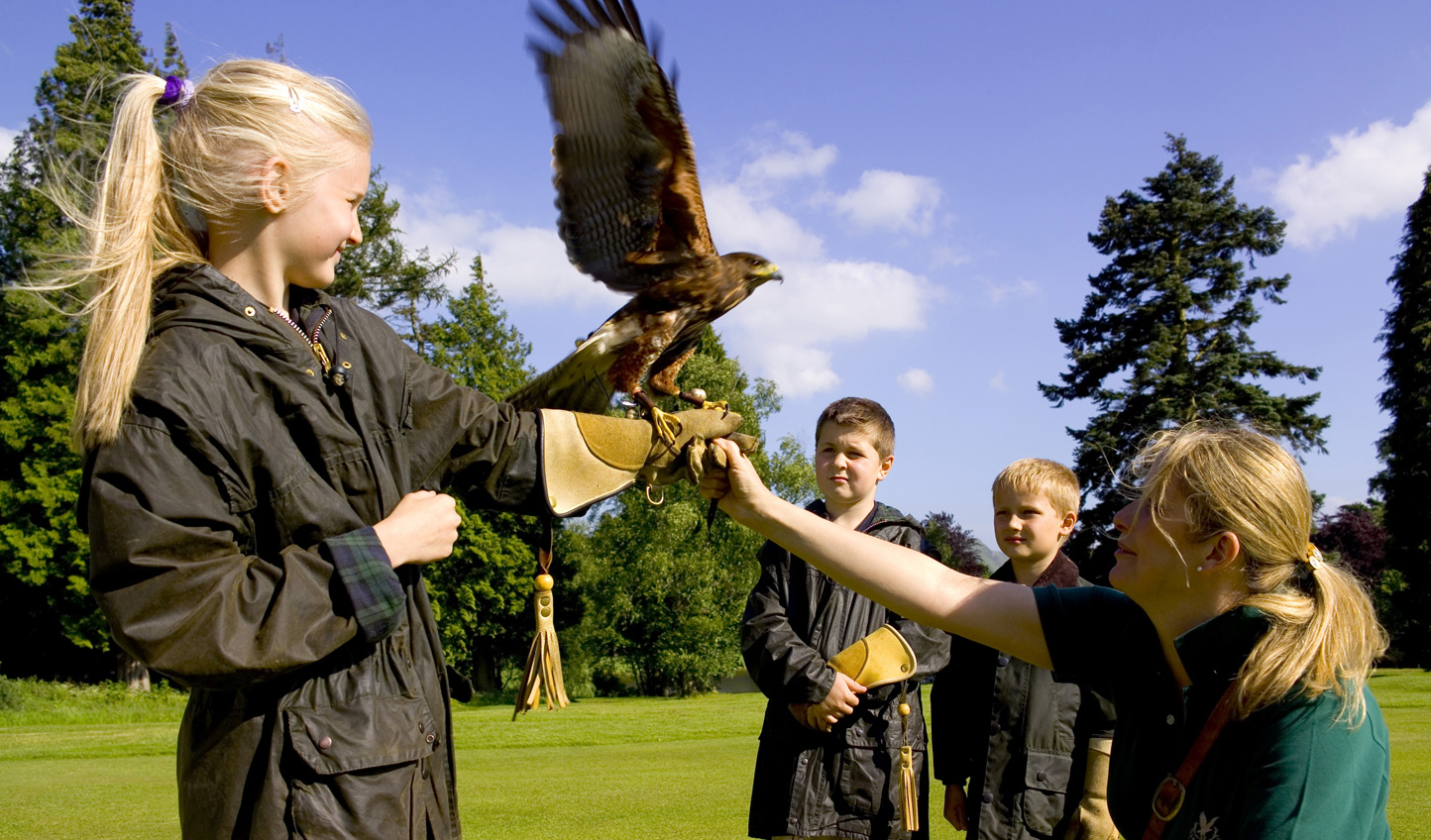 Turn your hand to falconry