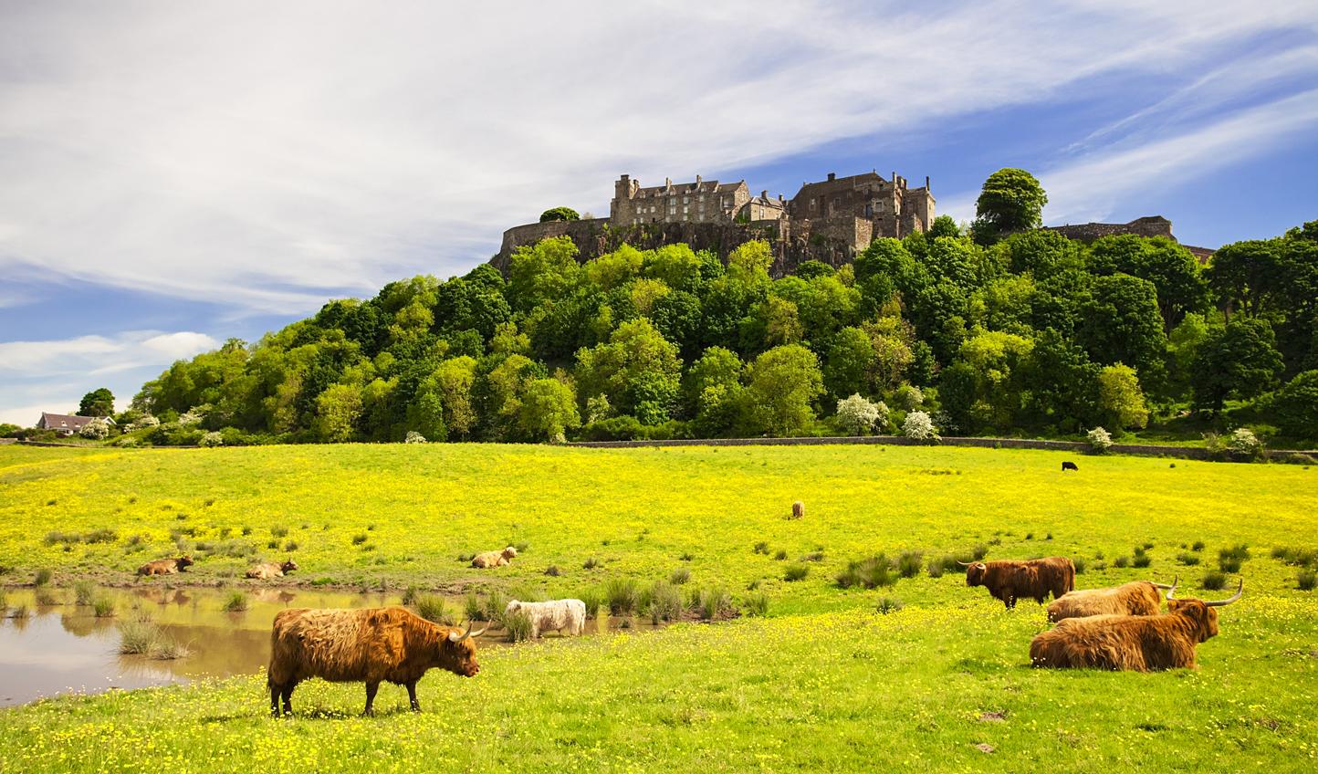 Stirling-Castle_465887477