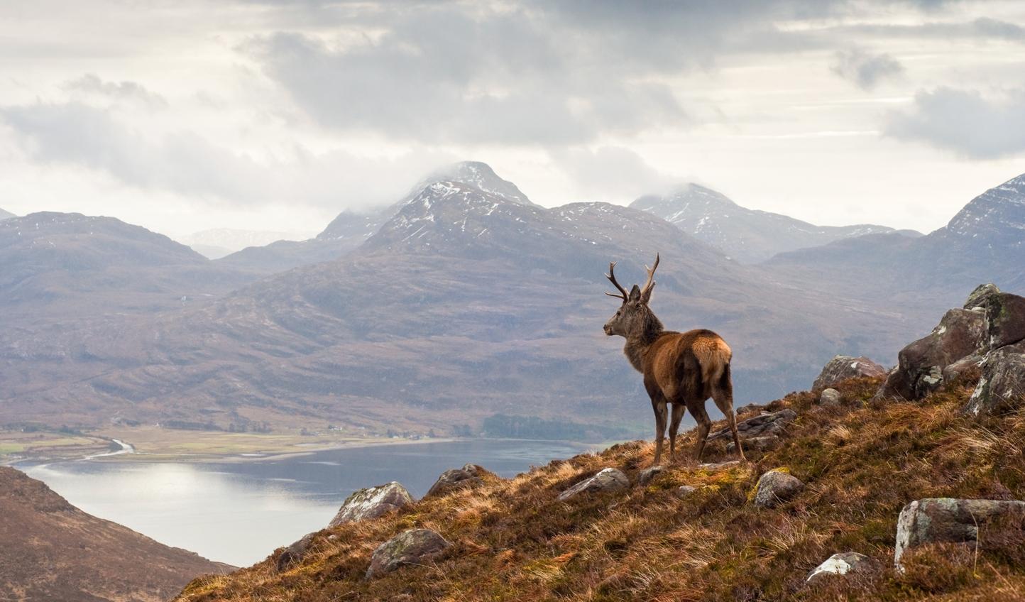 Wild-stag-overlooking-Loch-