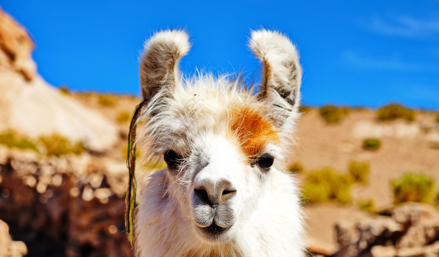 Meet the locals as you cruise across the altiplano