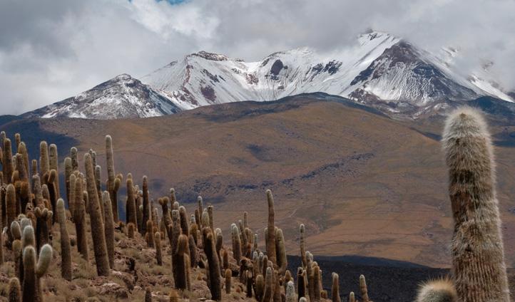 Dome-camp-Uyuni-cactus-moun