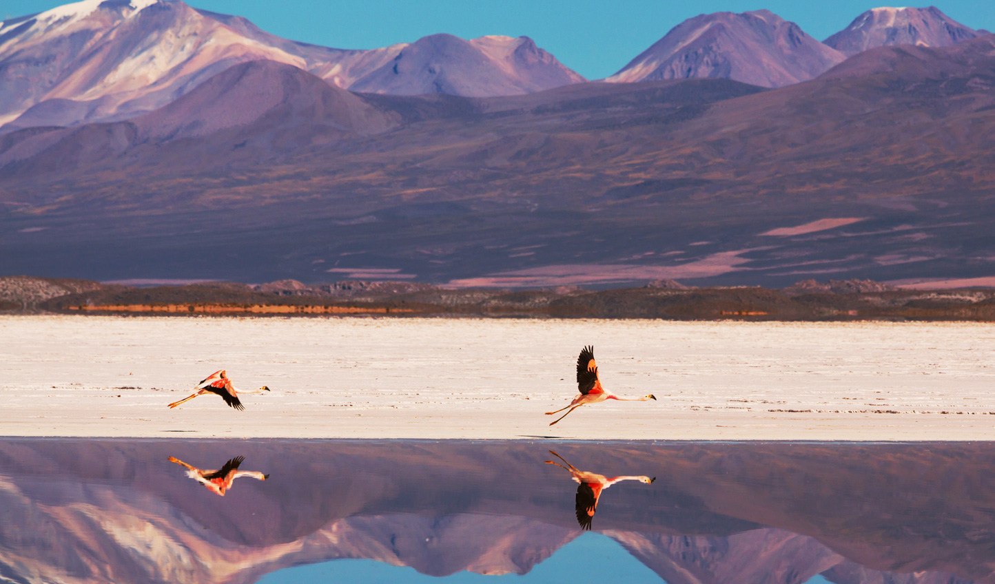 Flamingos,-Bolivia