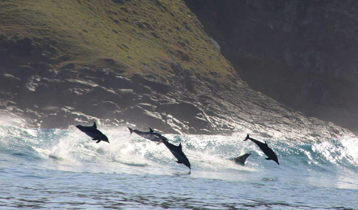 As if wildebeest weren't enough, you may even spot a pod of dolphins