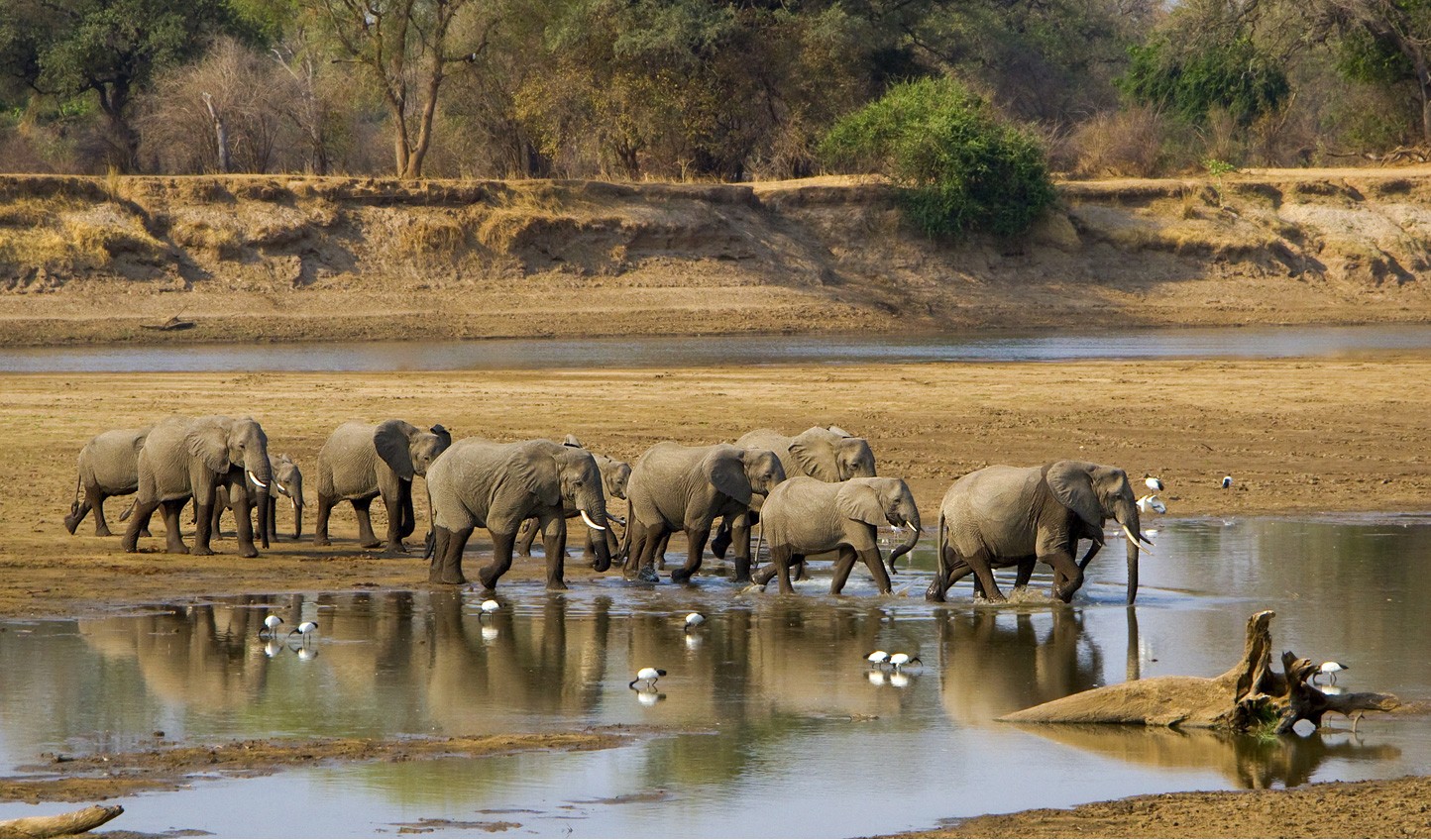 Witness an elephant river crossing for yourself