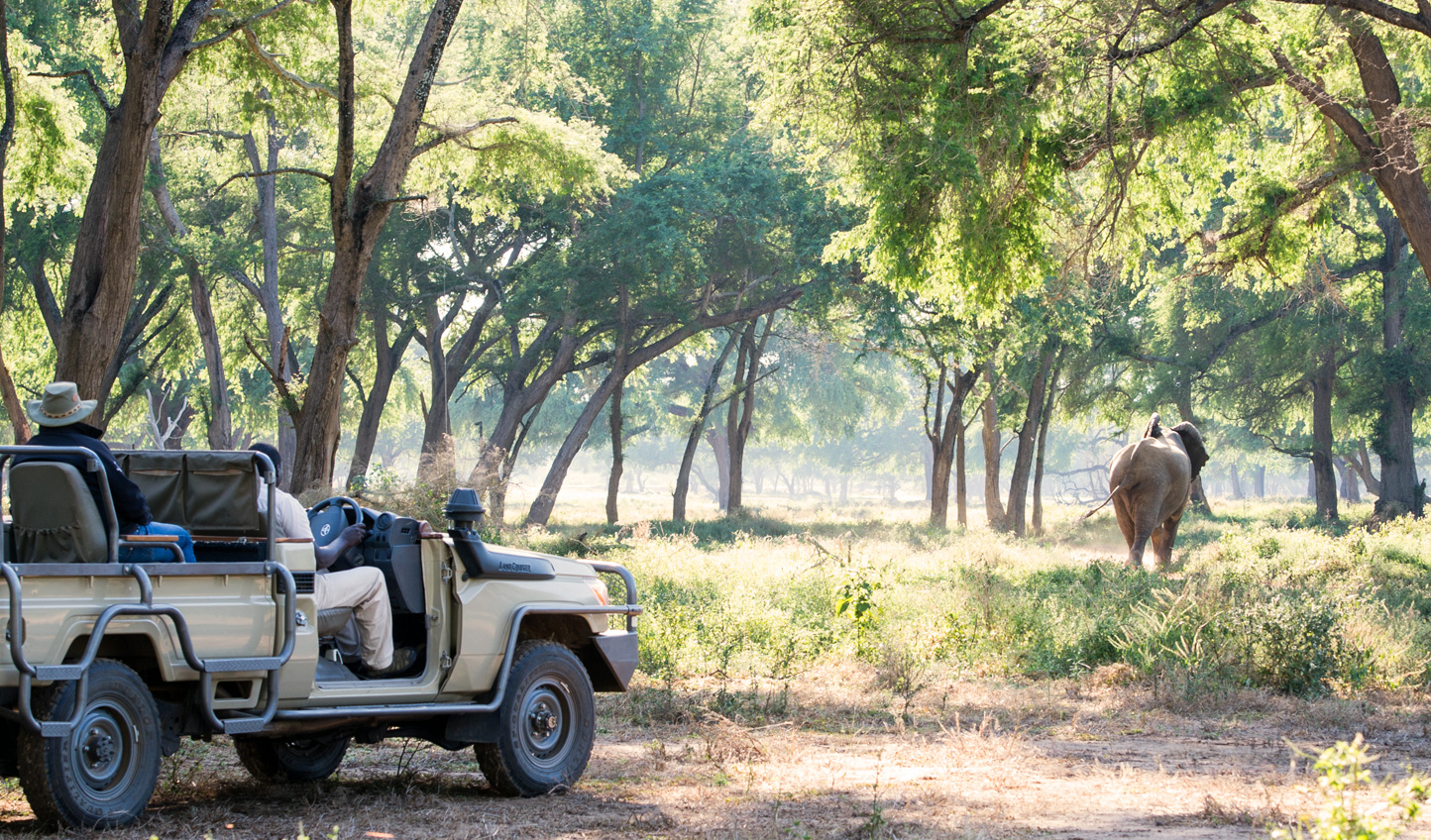 Head out on a game drive across the plains