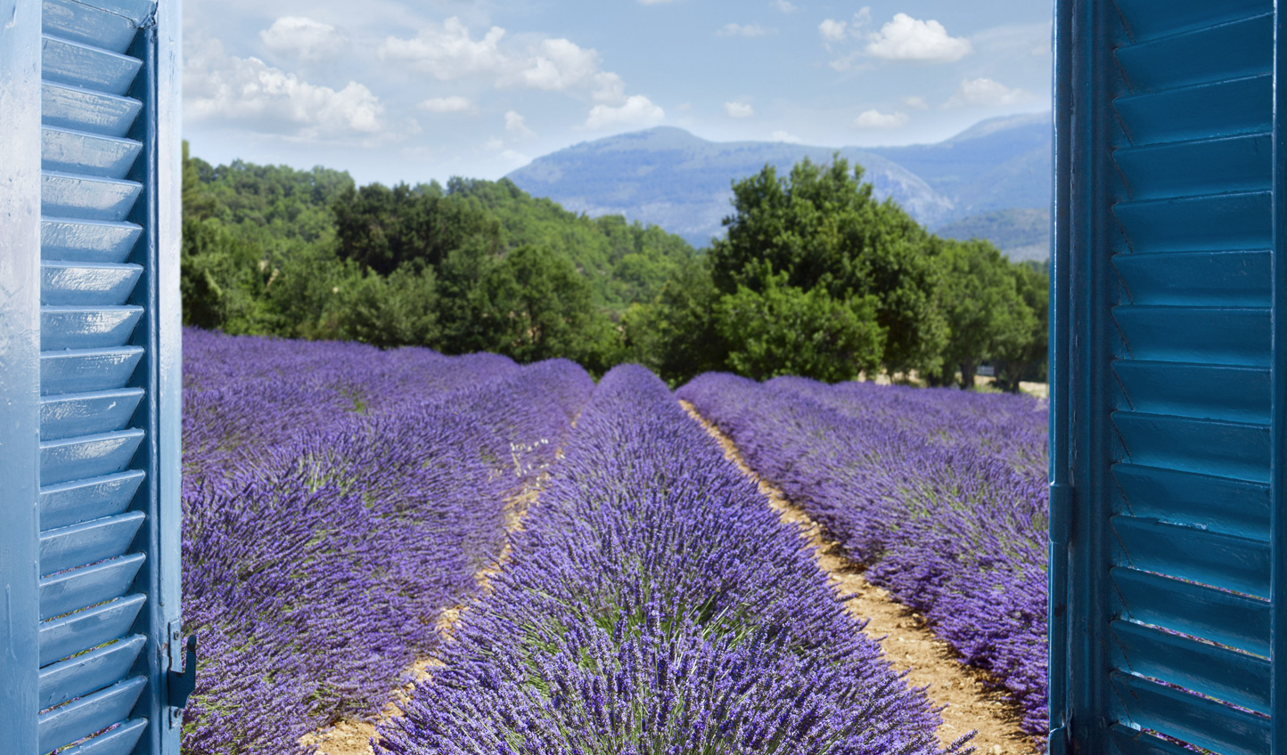 Throw open the shutters to fields of lavender