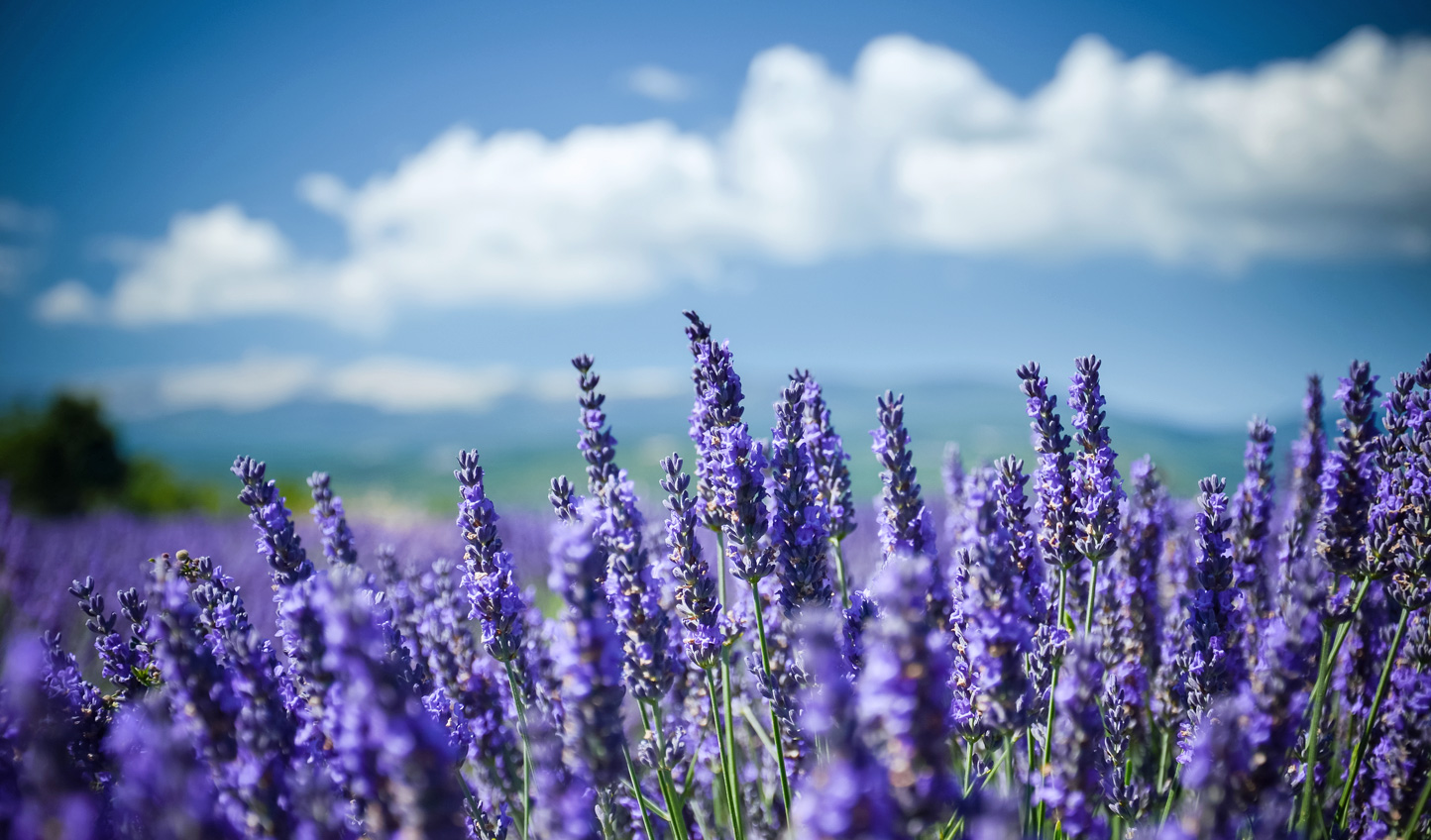 Breathe in the sweet smell of Provence