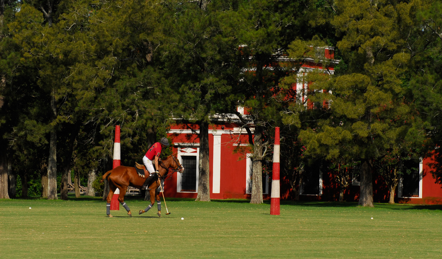 Learn to play polo with the pros
