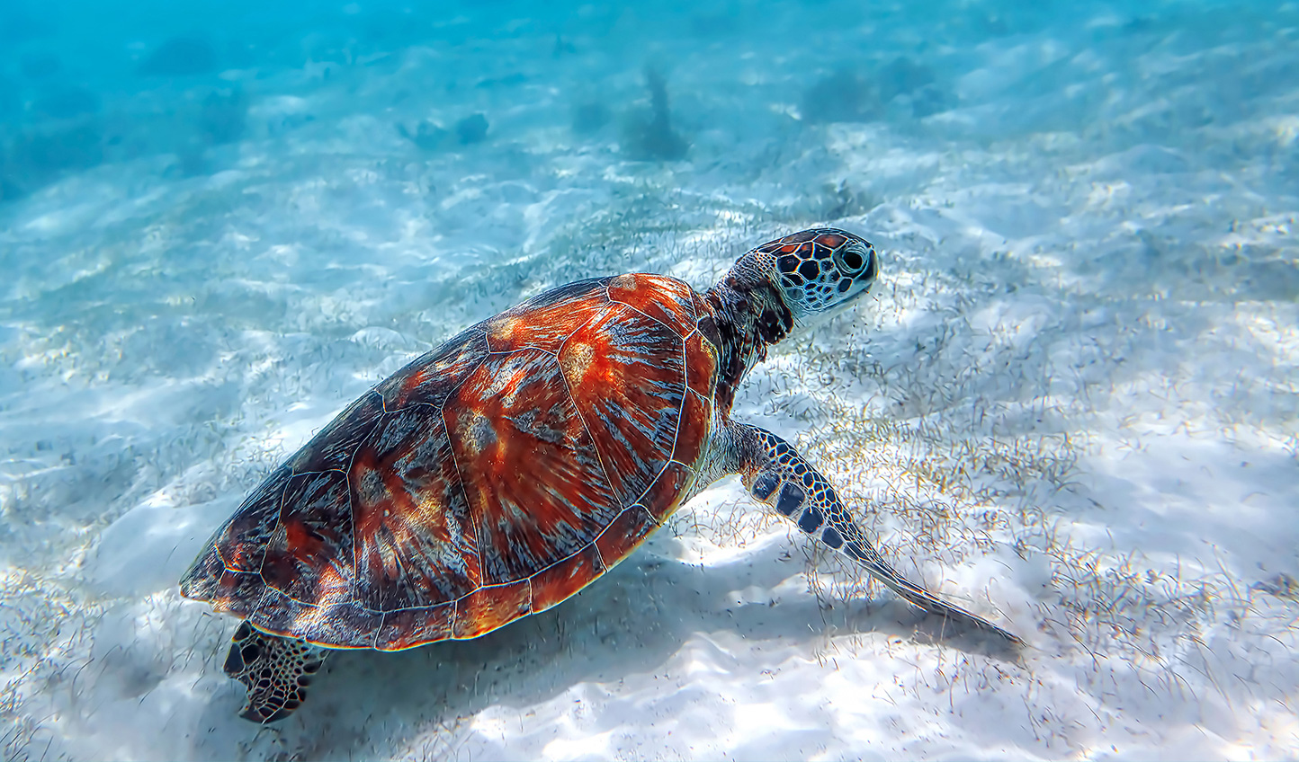 Dive down and discover a whole new side of wildlife in Zanzibar