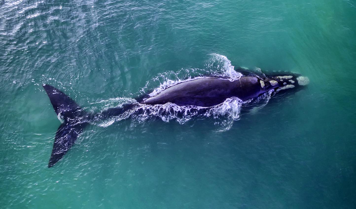 Spot whales over the Hermanus coastline