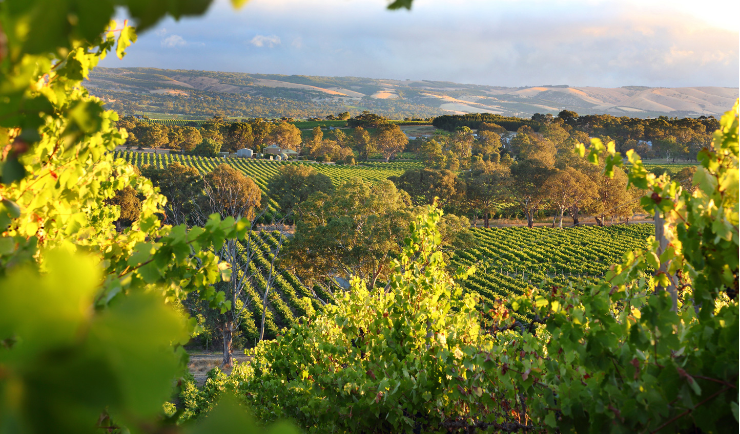 Breathe in the fresh air of McLaren Vale