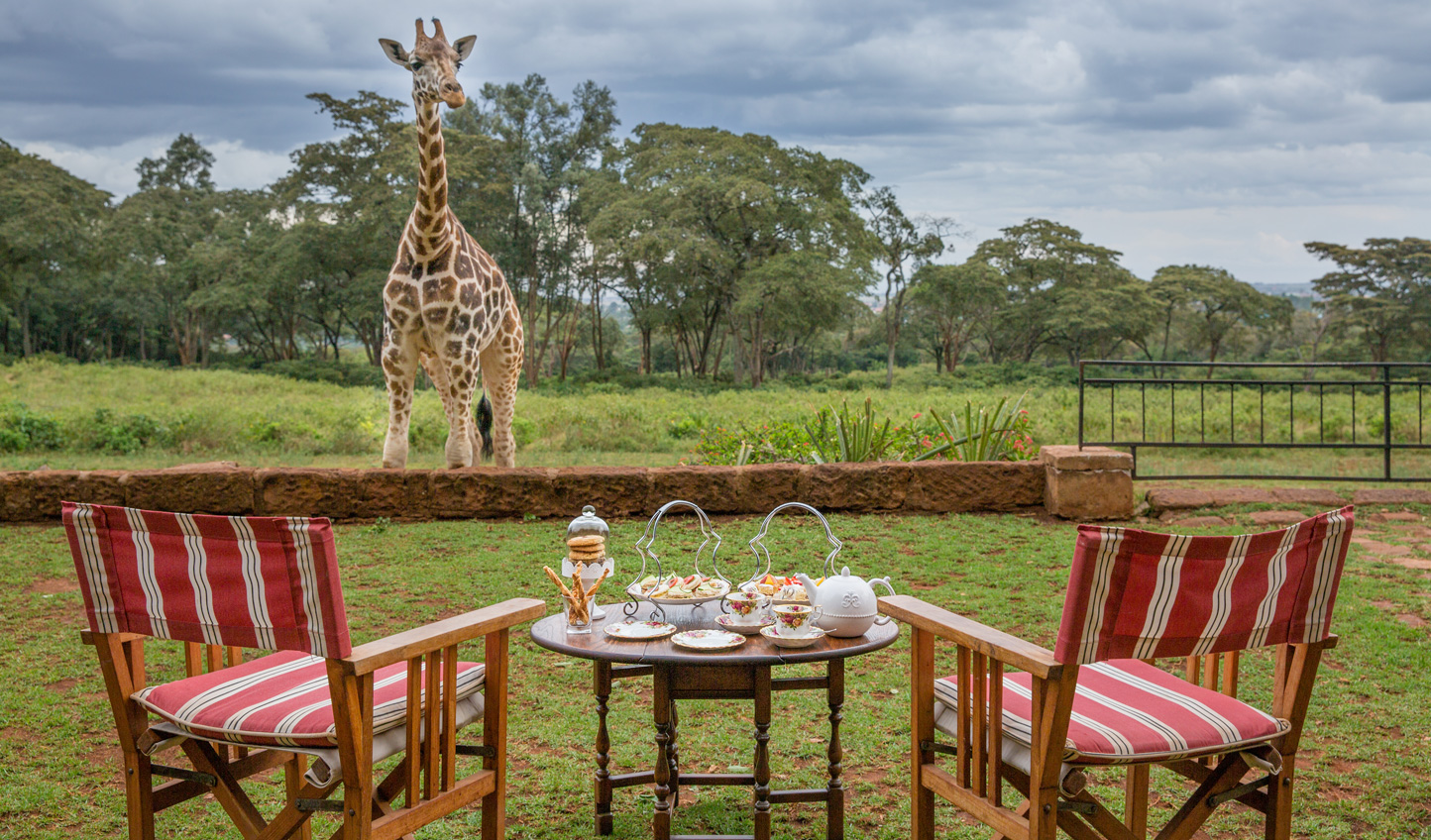 Share afternoon tea with some peckish neighbours