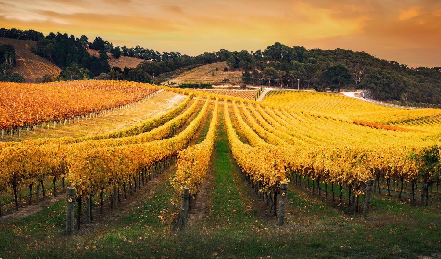 Stroll through endless vines