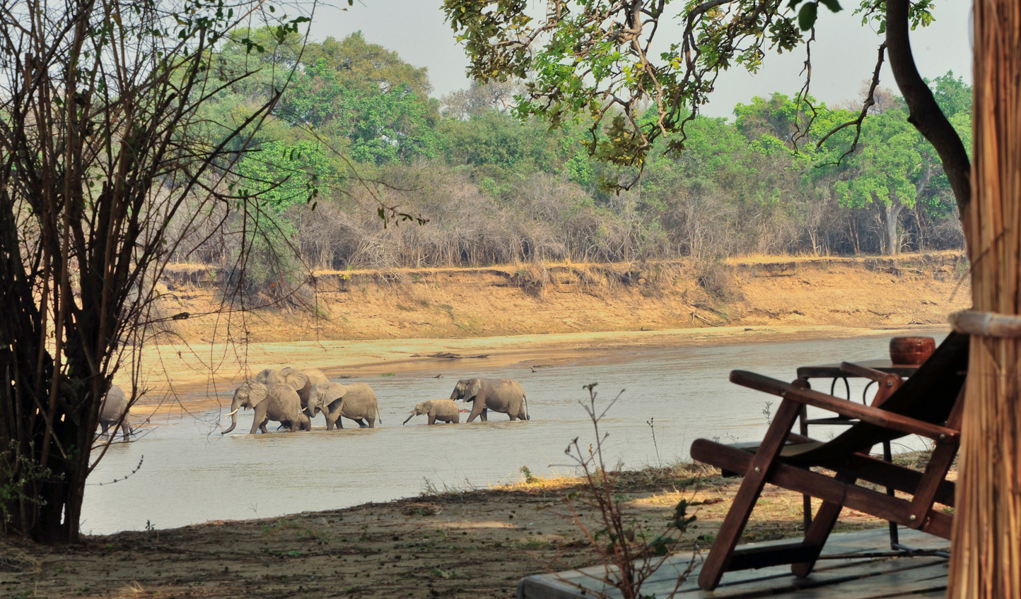Watch elephants crossing the Luangwa River from the camp
