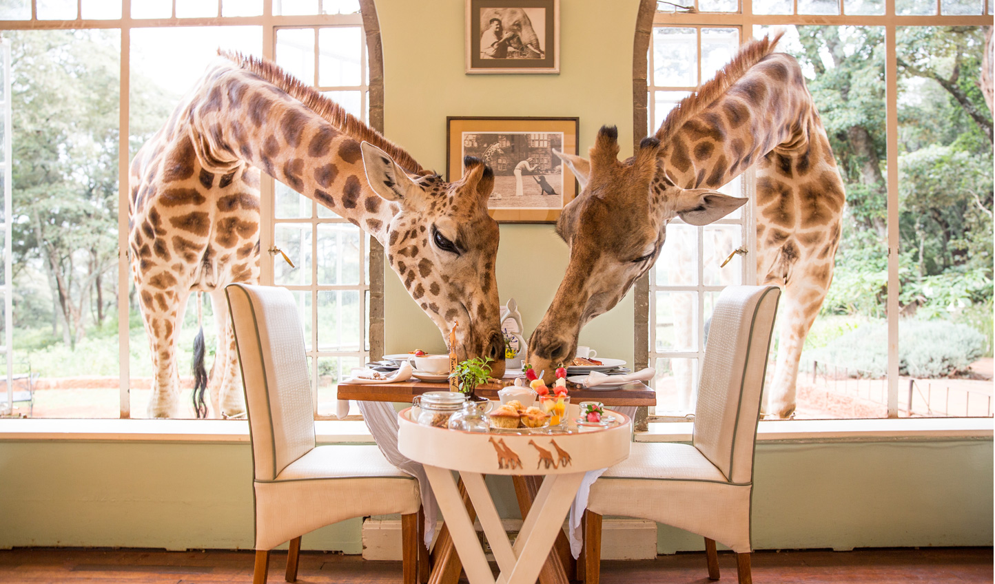 Share you breakfast with giraffes at Giraffe Manor