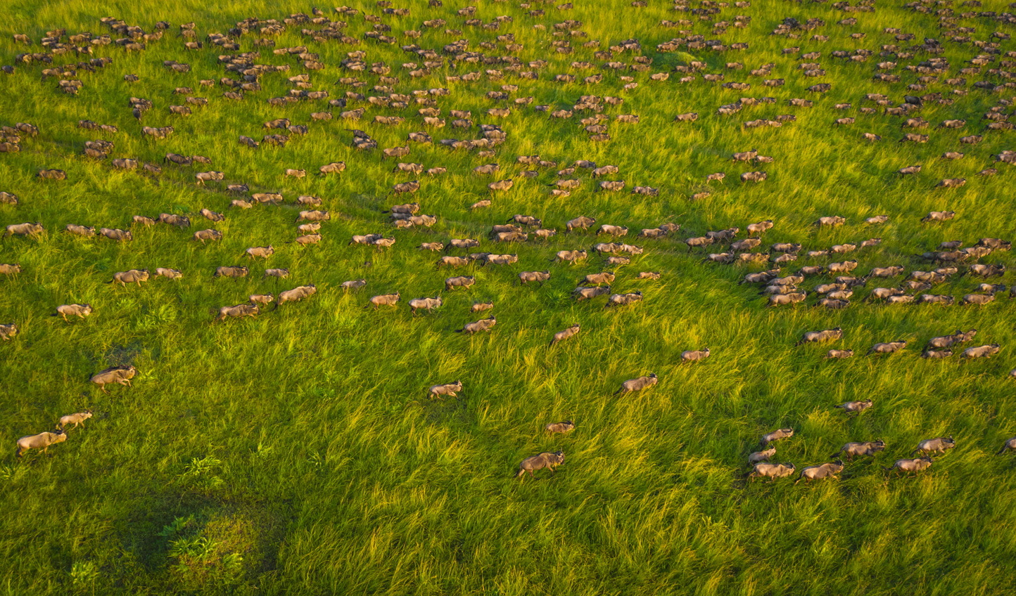 Watch the Great Migration from the air when you move on to Sala's Camp