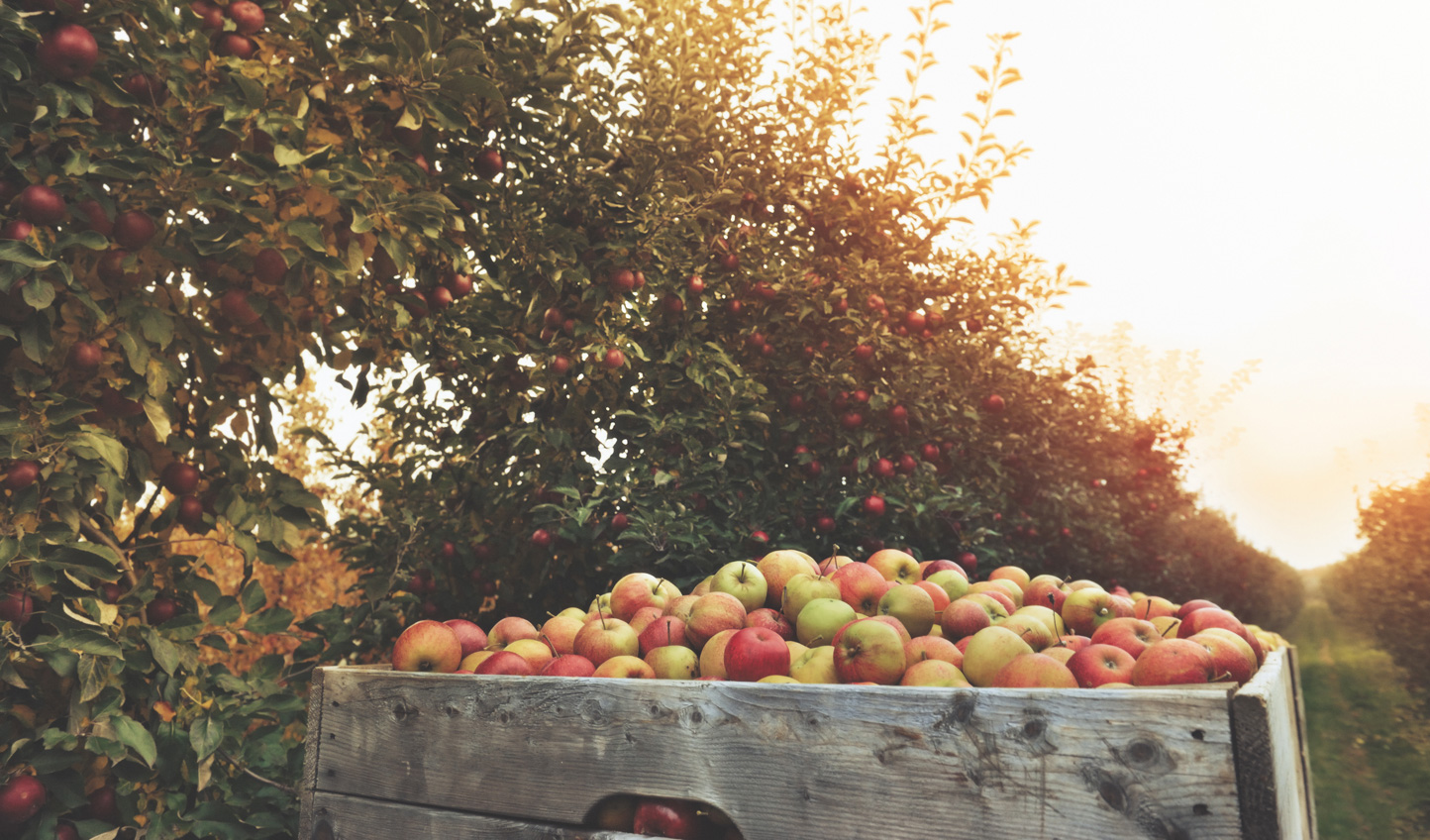 Gather local produce from an orchard for an exclusive cooking lesson