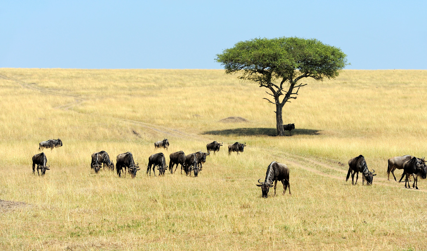 The famous Maasai Mara