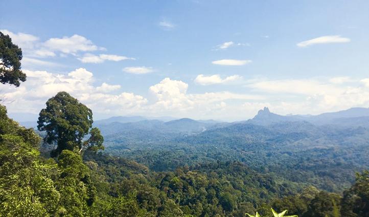 Borneo Trek