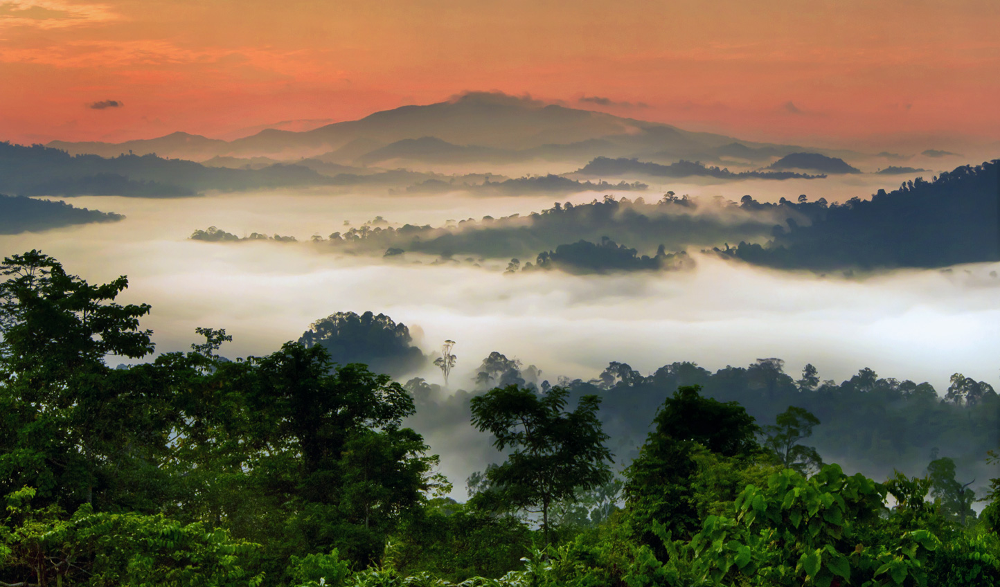 Sunrise view over the jungle of Borneo