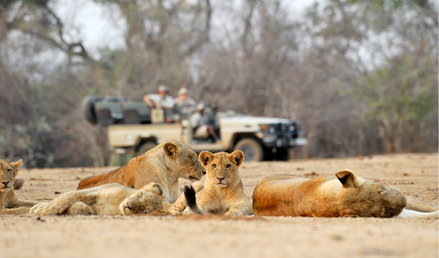 Catch sight of the Big (or little) Five out on a game drive