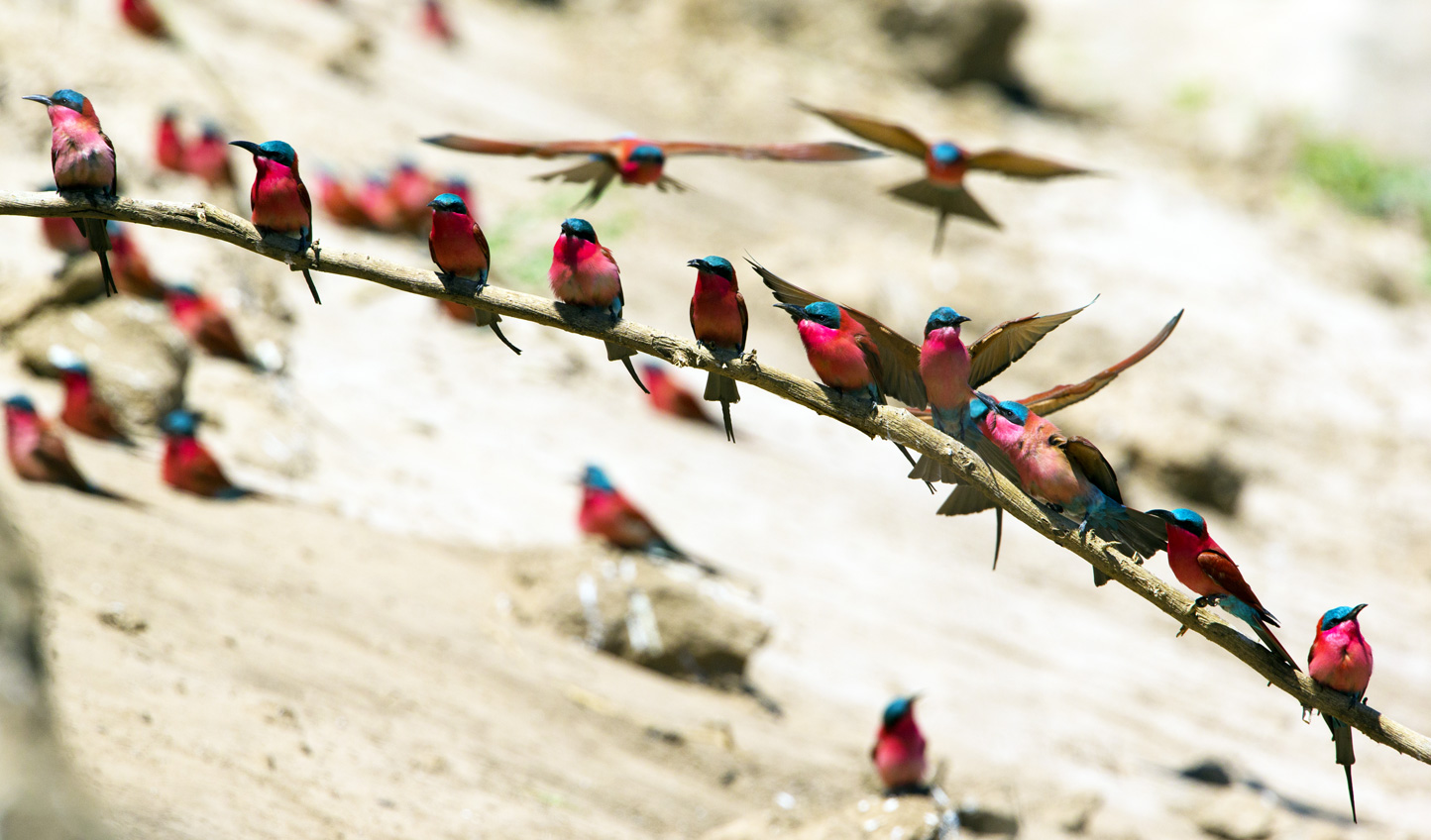Go on a walking safari to observe the flora and bird life